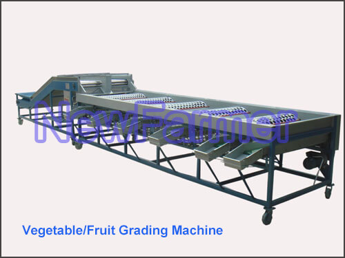 Vegetable and Fruit Grading Machine