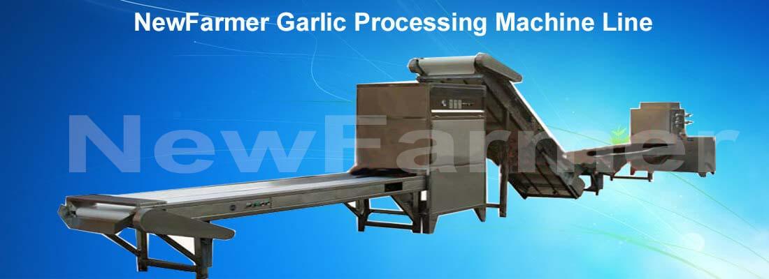 garlic peeling machine line